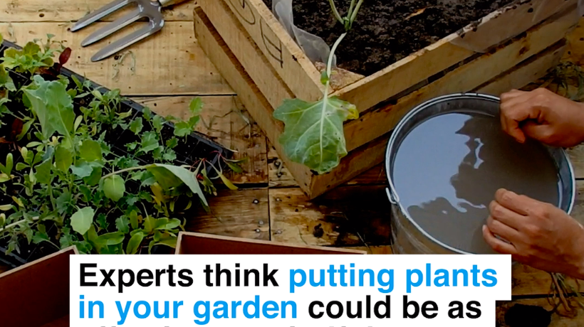 Experts think putting plants in your garden could be as effective as mindfulness at reducing stress