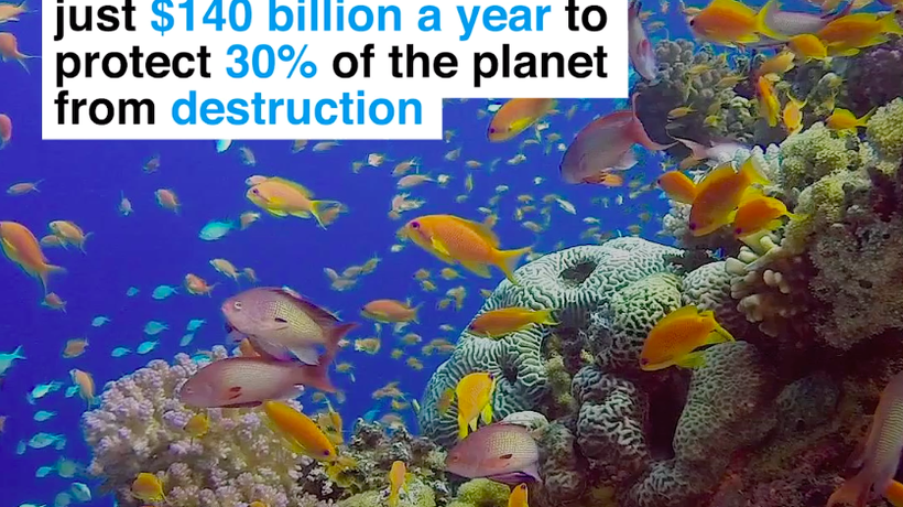 It would cost the world just $140 billion a year to protect 30% of the planet from destruction
