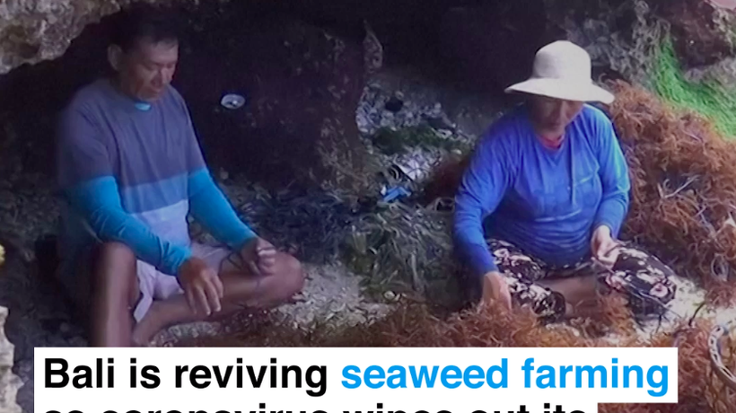 Bali is reviving seaweed farming as coronavirus wipes out its tourist trade