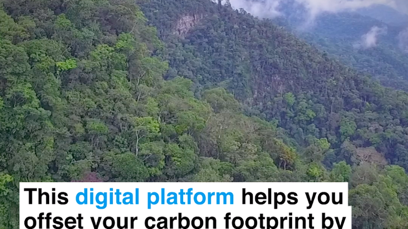This digital platform helps you offset your carbon footprint by restoring forests