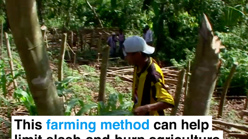 This farming method can end slash-and-burn agriculture while feeding communities
