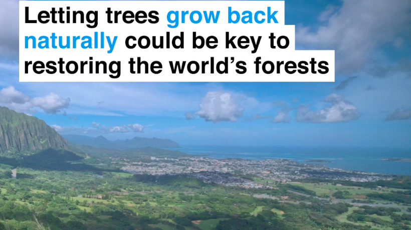 Letting trees grow back naturally could be key to restoring the world's forests