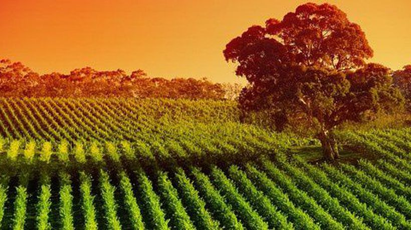 Top 5 Things To See In The Barossa Valley Region Of South Australia