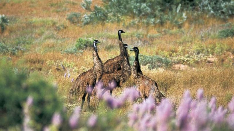 The Top 5 Best Spots To See Aussie Wildlife In Western Australia!