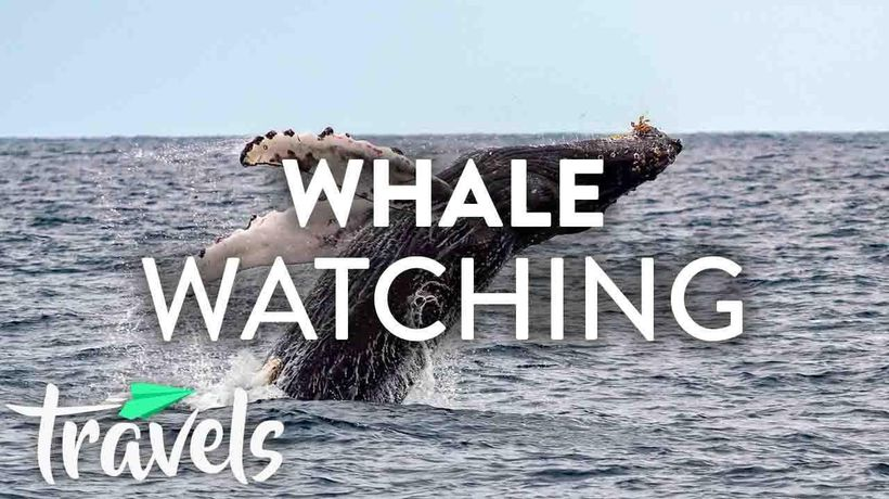 Top 10 Whale Watching Spots in the US (2019)