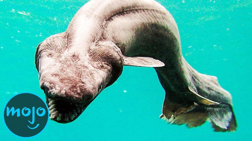 Top 10 Mysterious Creatures That Live in the Deep Sea