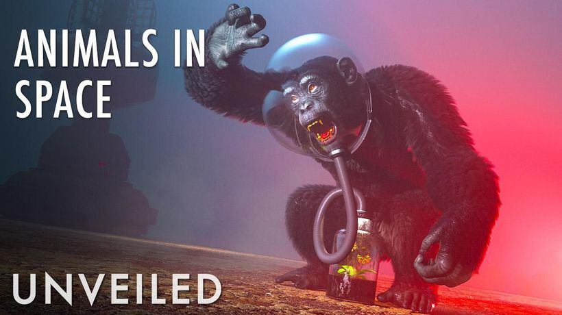 What If We Sent Animals To Alien Planets?   Unveiled
