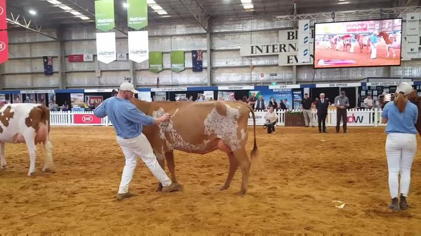 IDW-Ayrshire Show