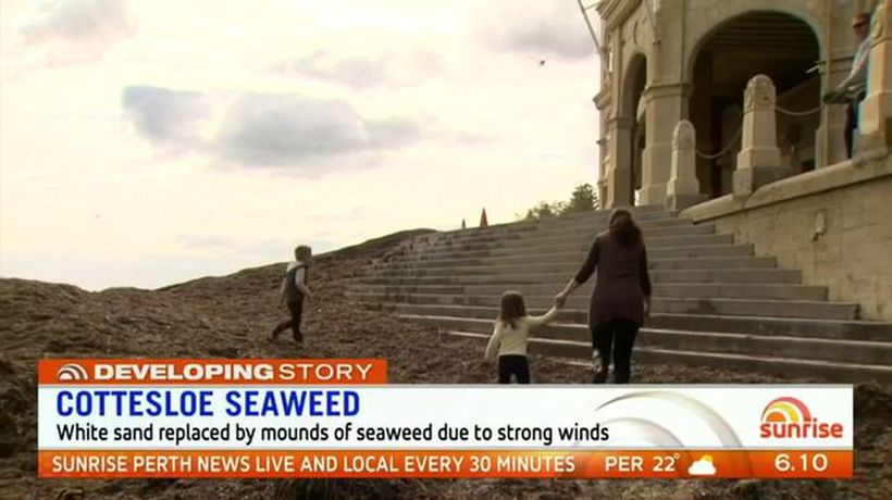 Seaweed replaces Cottesloe Beach