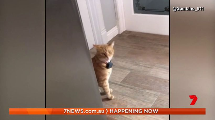 Video of cat with southern accent goes viral