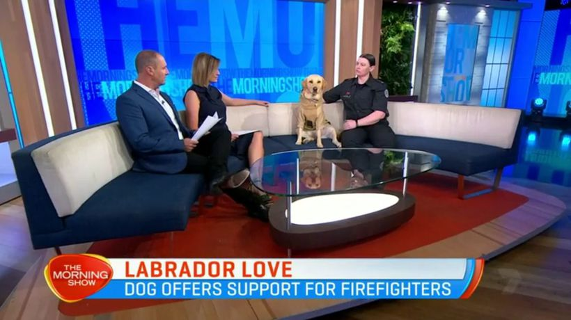 The adorable Labrador helping our firefighters