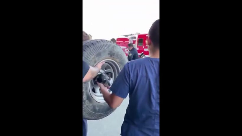 Firefighters rescue dog from inside wheel