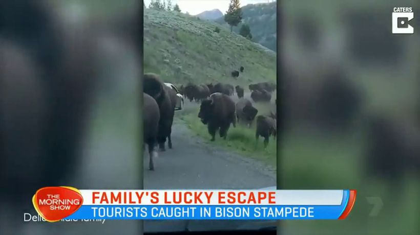 Family caught in bison stampede