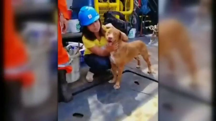 Dog saved by oil rig workers, 220km from shore