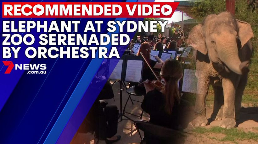 Elephant at Sydney Zoo serenaded by orchestra