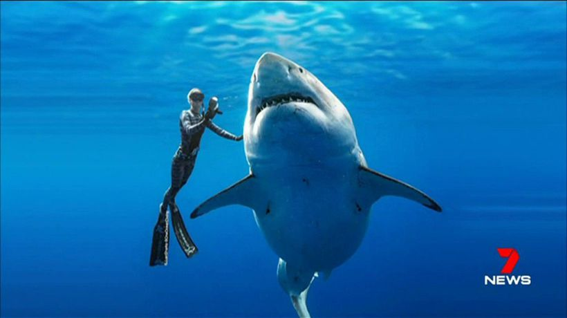 Photographers capture largest Great White on record
