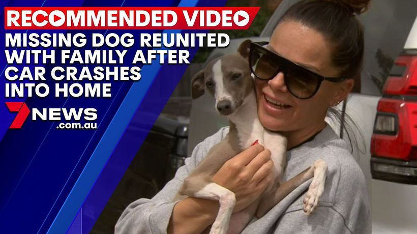 Missing dog reunited with Melbourne family after car crashes into home