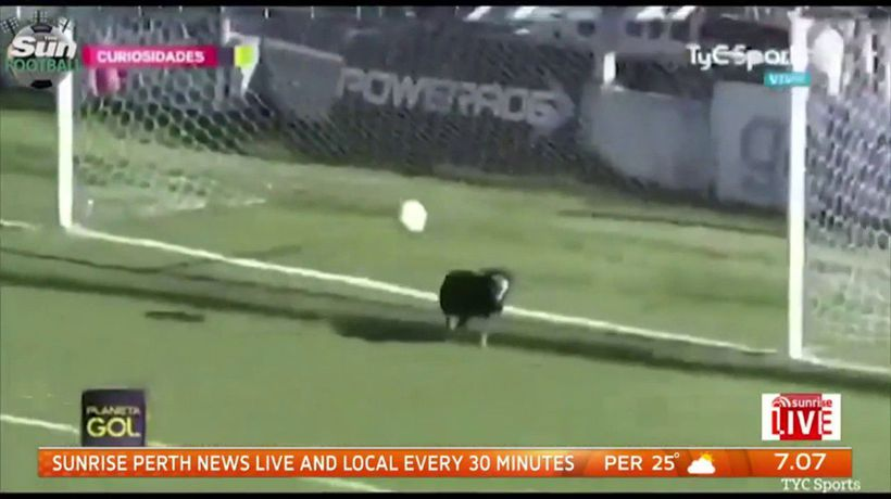 Pooch on hand to save goal after goalkeeper's blunder