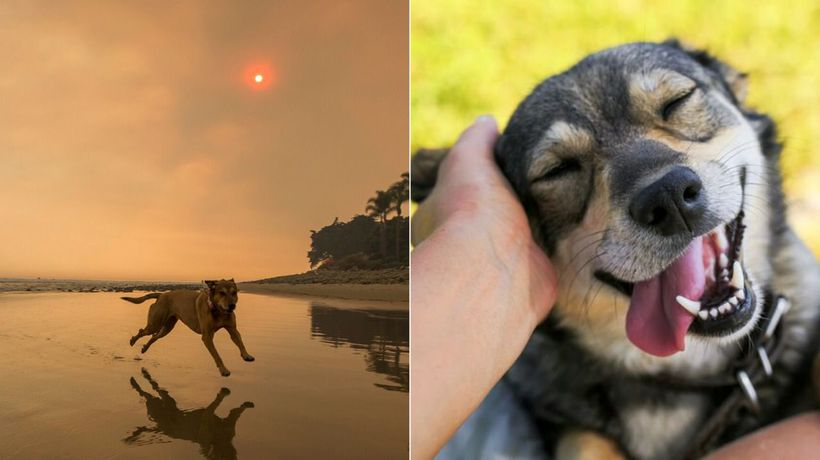 How to protect your pets from bushfire smoke