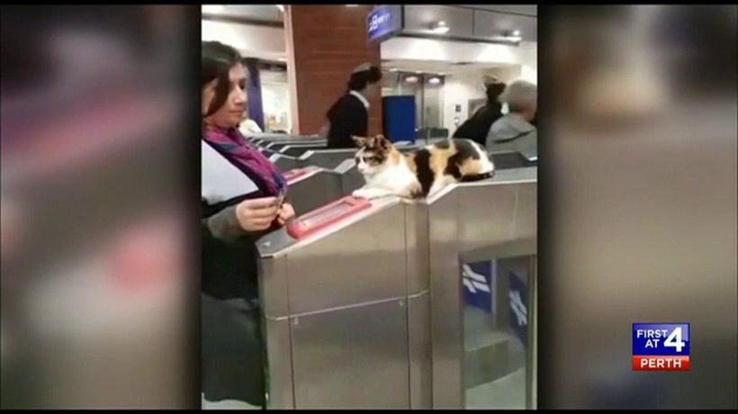 Stray cat greets train commuters