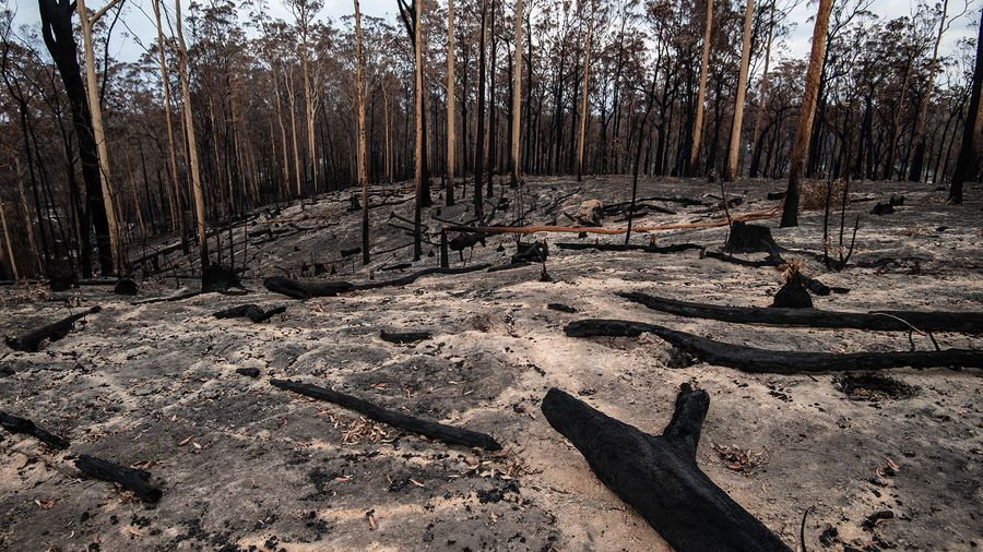 NSW bushfires contained as rain soaks state