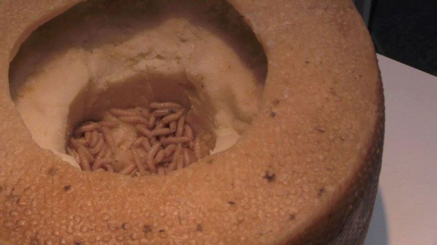 Maggots and cobra hearts at 'Disgusting Food Museum' in Sweden