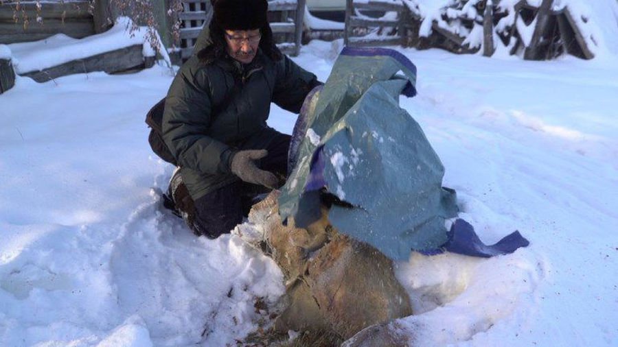 In Siberia, Chinese demand for tusks fuels 'mammoth' rush
