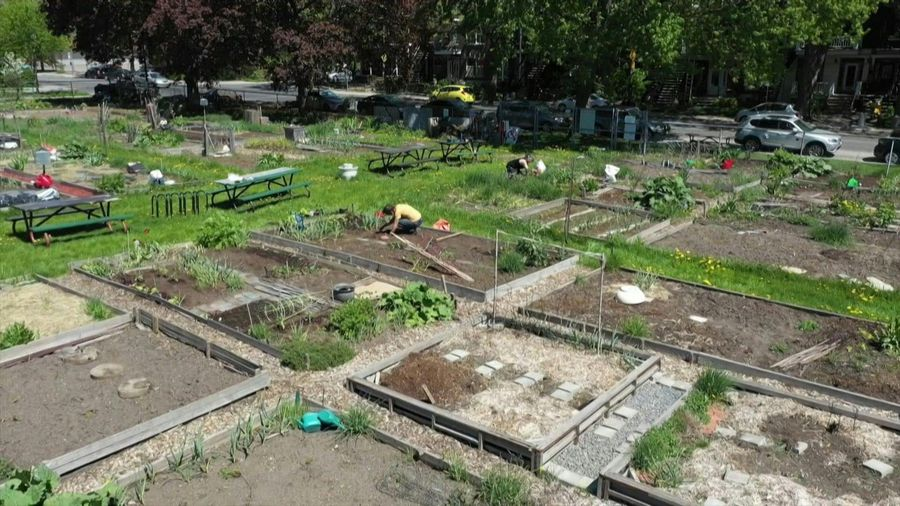 """'People have rediscovered their roots"""": Montreal's community gardens reopen"""