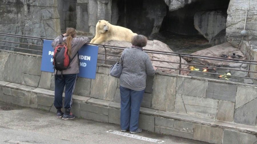 Visitors return to Copenhagen zoo as cultural sites reopen