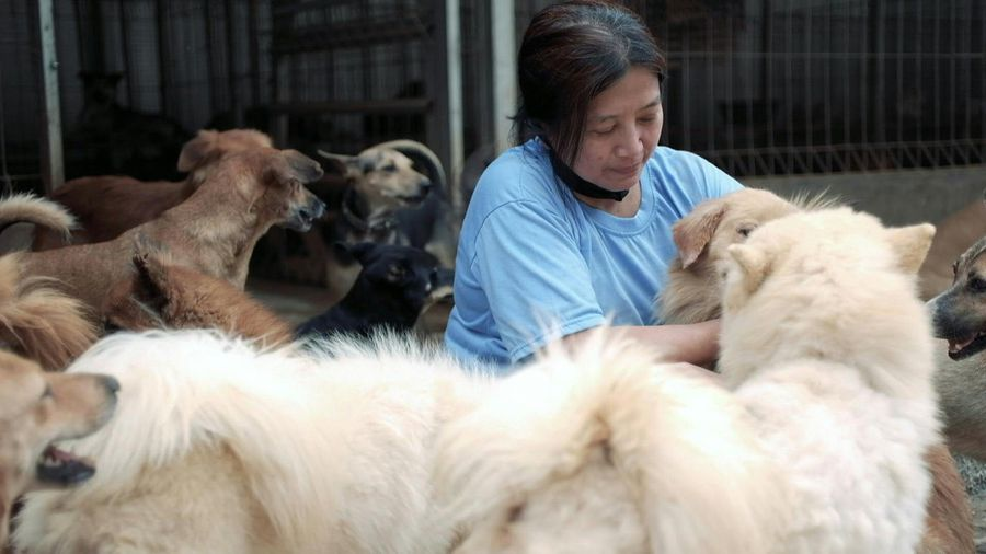 Indonesia 'dog doctor' rescues canines from butcher peril