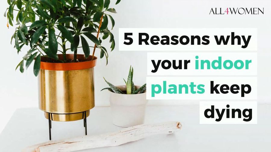5 reasons why your indoor plants keep dying