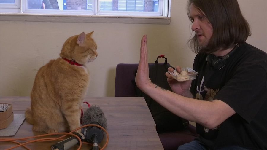 World's most famous street cat returns to the screen