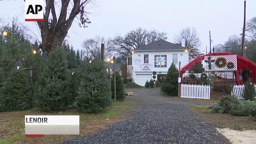 Christmas tree supply comes up short across the US