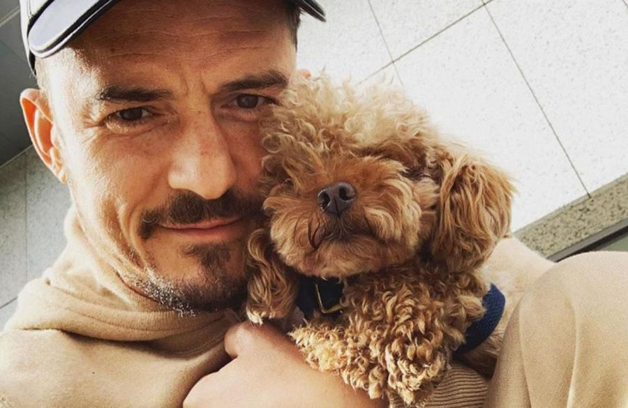 Orlando Bloom and Katy Perry's dog Mighty goes missing