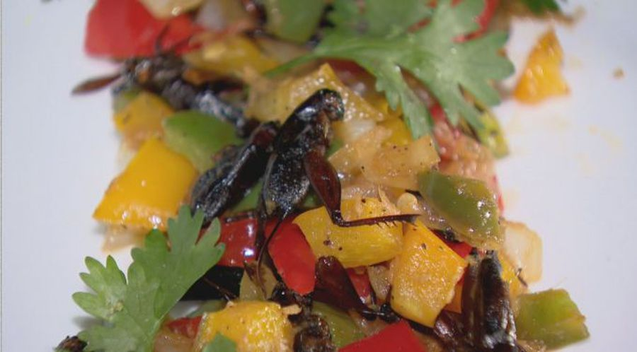 Would you be willing to eat insects?