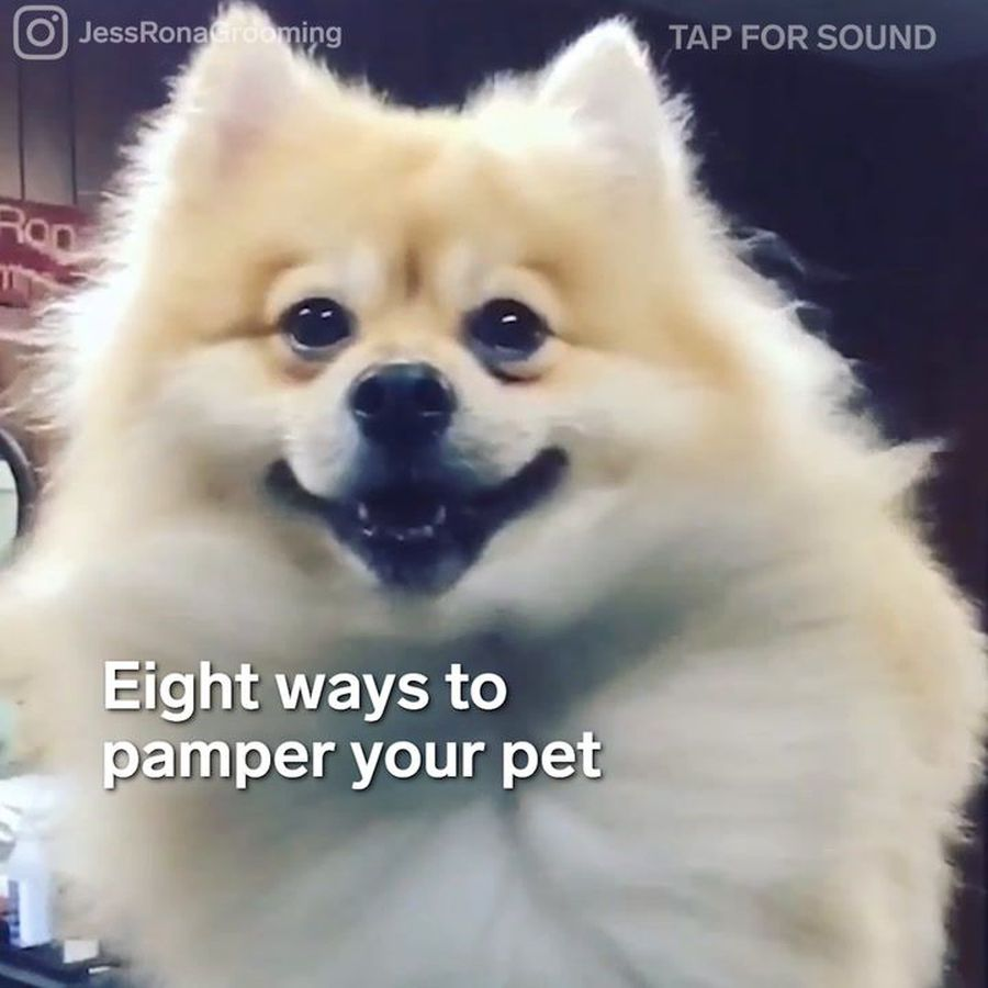 8 ways to pamper your pet