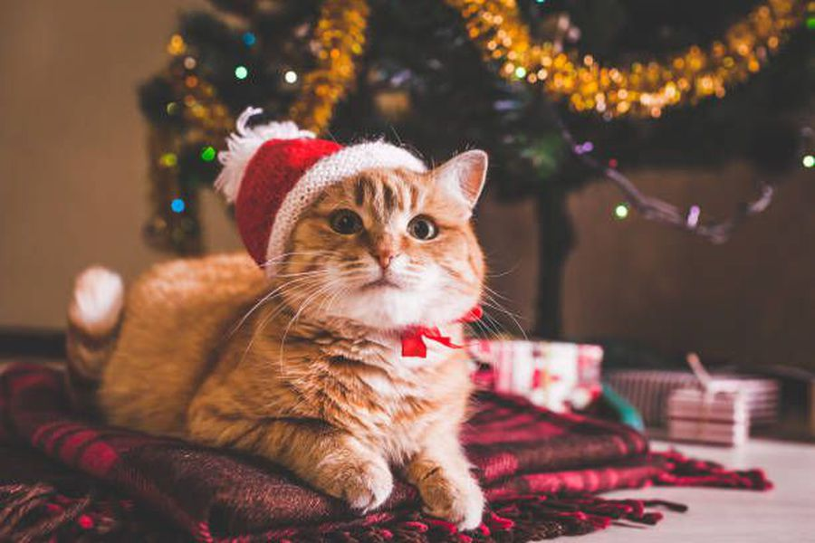 How to keep your cat away from Holiday decorations