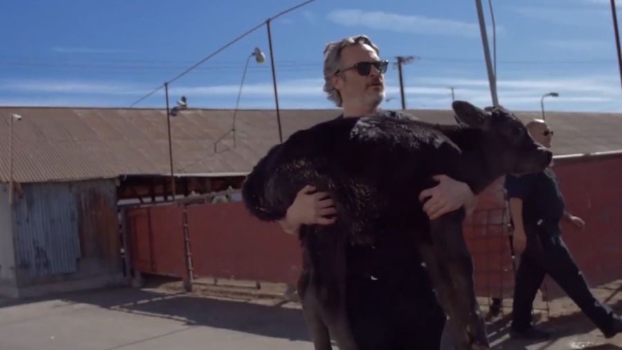 Joaquin Phoenix saves cow and her calf from slaughter