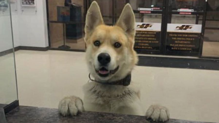 Lost Dog Reports Himself Missing At Local Police Station