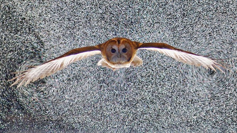 Amazing Study On Birds In Flight Could Affect Future Aircraft Designs