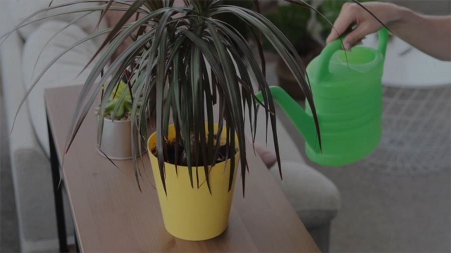 5 Plant Care Mistakes People Are Making While in Quarantine
