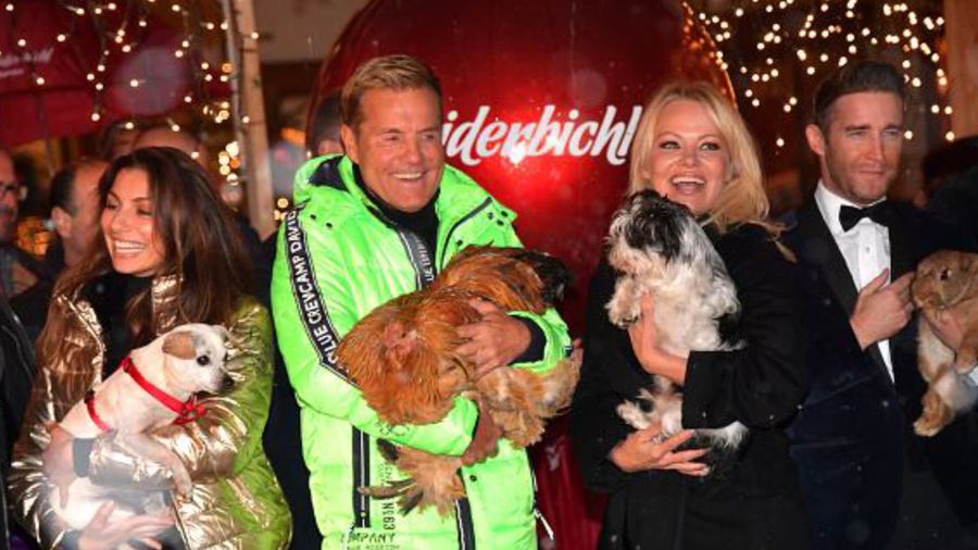 Pamela Anderson offers to adopt Texas A&M University's test dogs for Christmas
