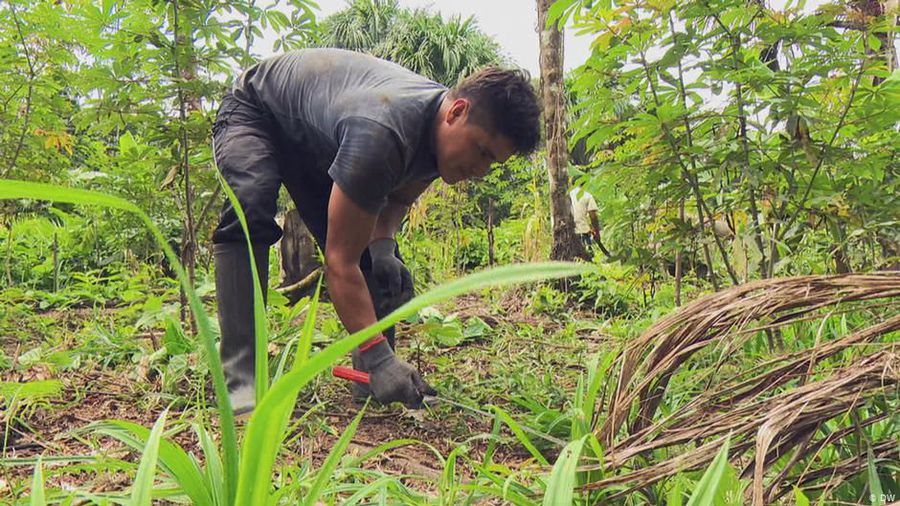 Peru: Sustainable farming in the rainforest