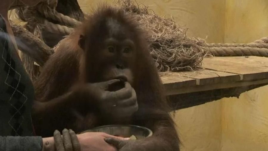 Lean times during lockdown in cash-strapped Ukrainian zoo