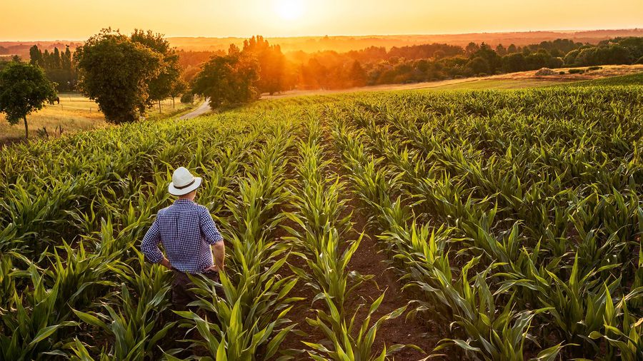 ACCC will not oppose AIRR rural deal with Elders