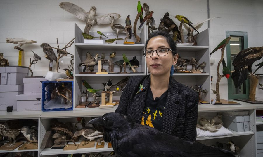 Ask an expert: the Australian Museum's ornithologist picks her Bird of the Year