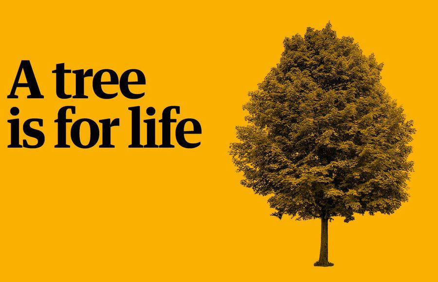 Play your part in the Guardian's charity appeal: a tree is for life