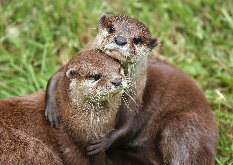 'You can't furlough an otter': why one family-run zoo remains shut