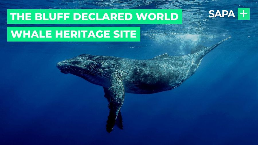 The Bluff, Durban, declared world whale heritage site