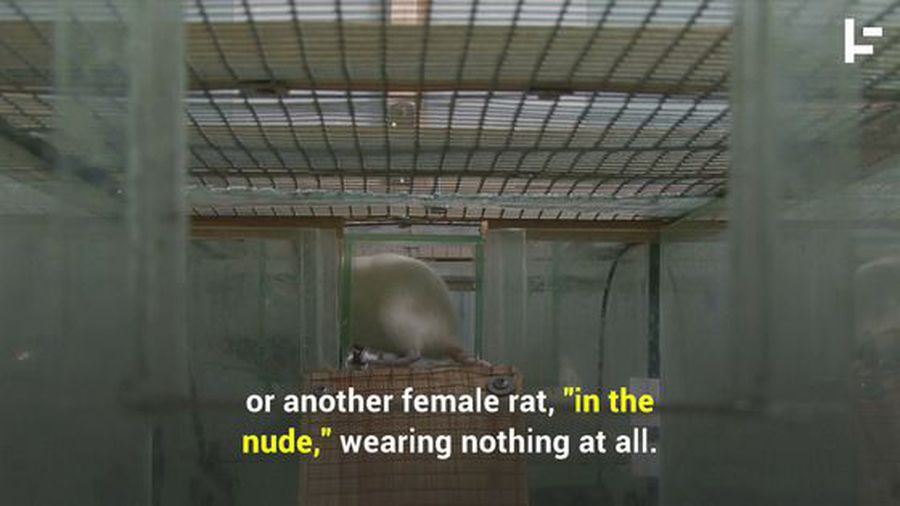 Here's Why Men (and Rats) Love Lingerie